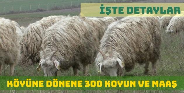 Köyüne Dönene 300 Koyun ve Maaş Desteği Şartları Nelerdir?