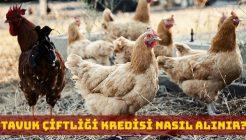 Tavuk Çiftliği Kredisi Nasıl Alınır? Hangi Bankalar Verir?