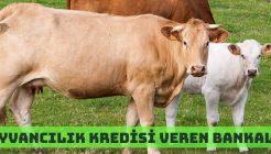 Hayvancılık Kredisi Veren Bankalar ve Şartları