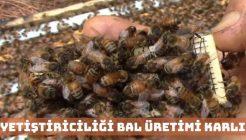 Arış Yetiştiriciliği ve Bal Üretimi Yapmak Karlı Bir İş Midir?