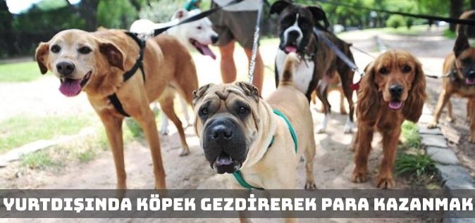 Yurt Dışında Köpek Gezdirerek Para Kazanmak